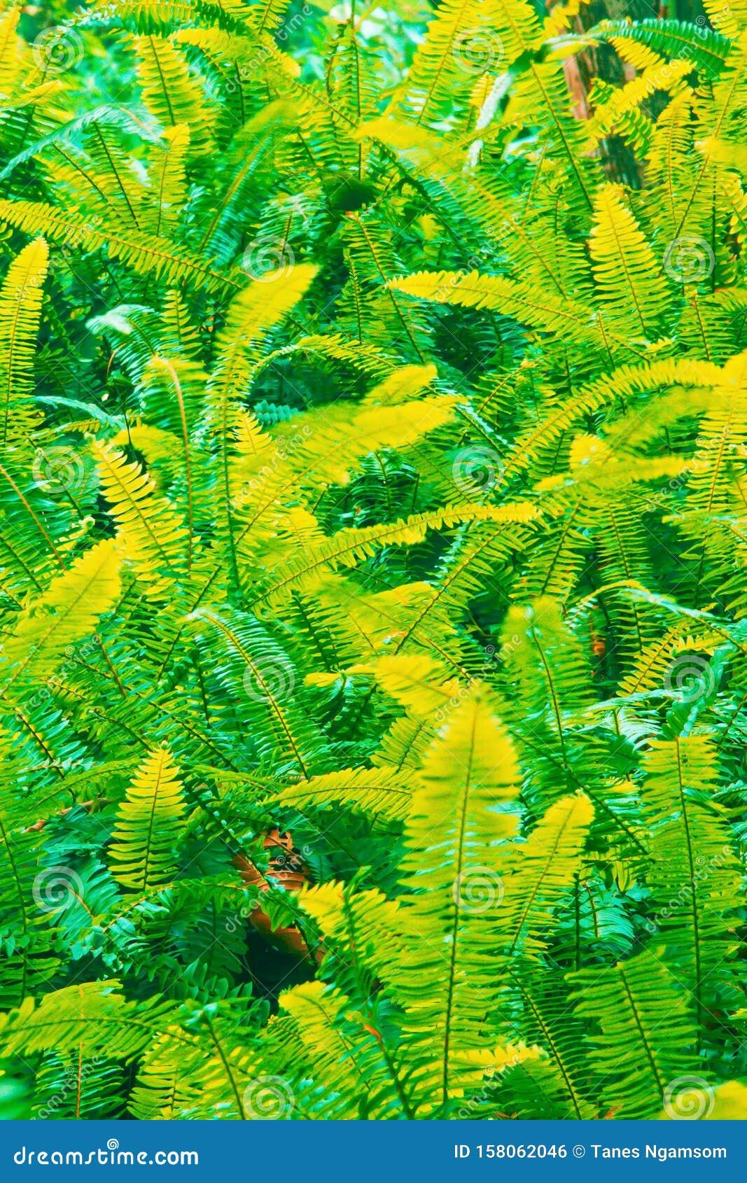 Fantastic colors of fern leaves