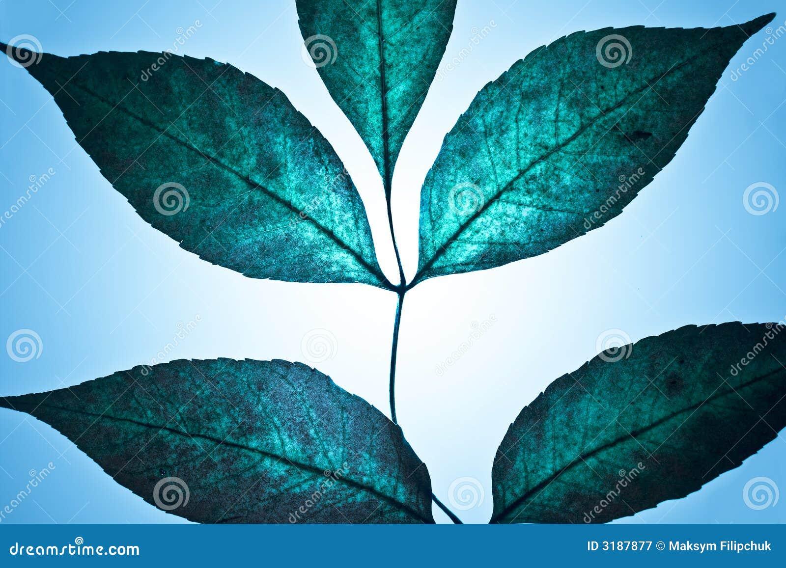 Fantastic Leaves Stock Image. Image Of Majestic