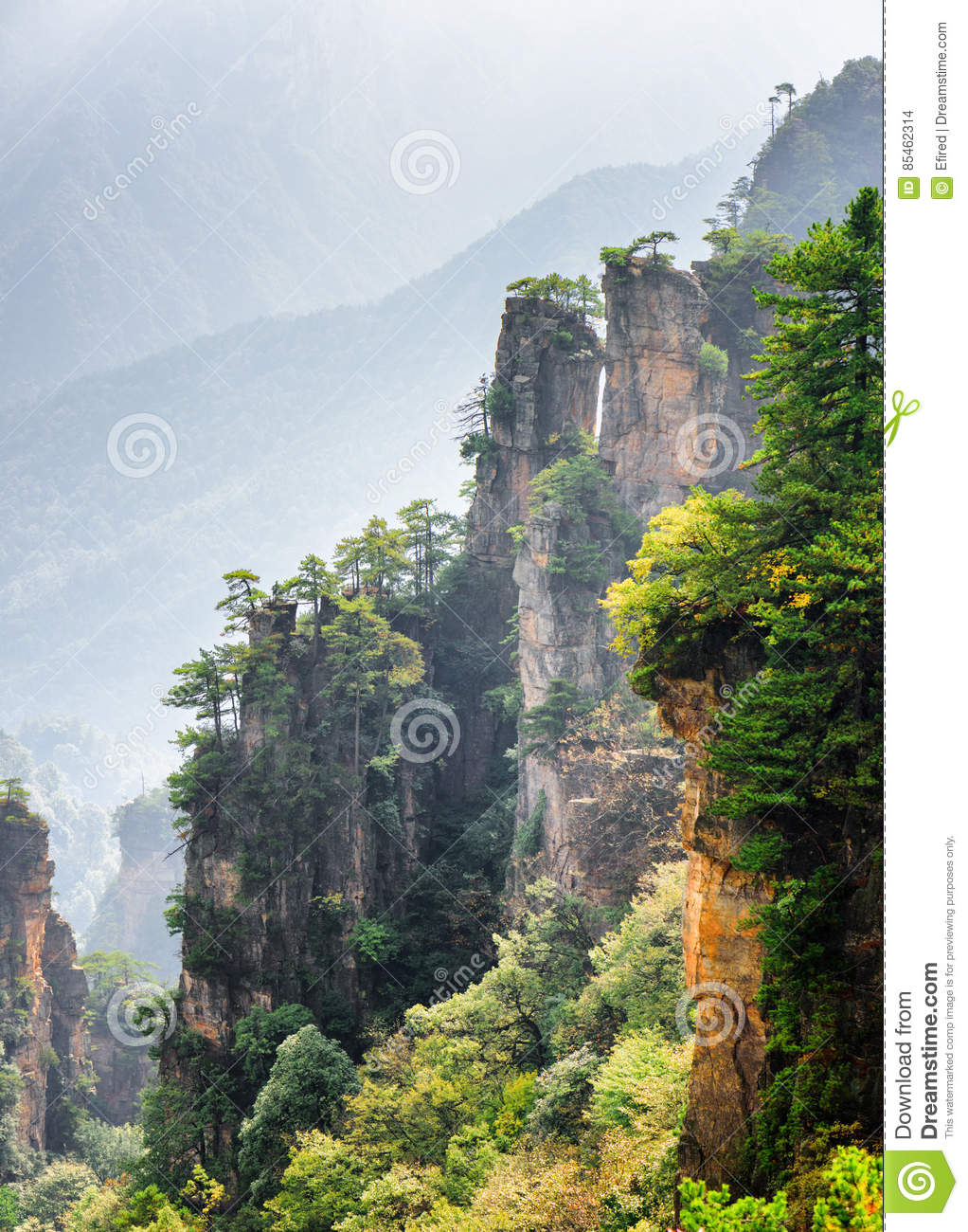 Fantastic view of trees growing on steep cliffs Avatar Rocks