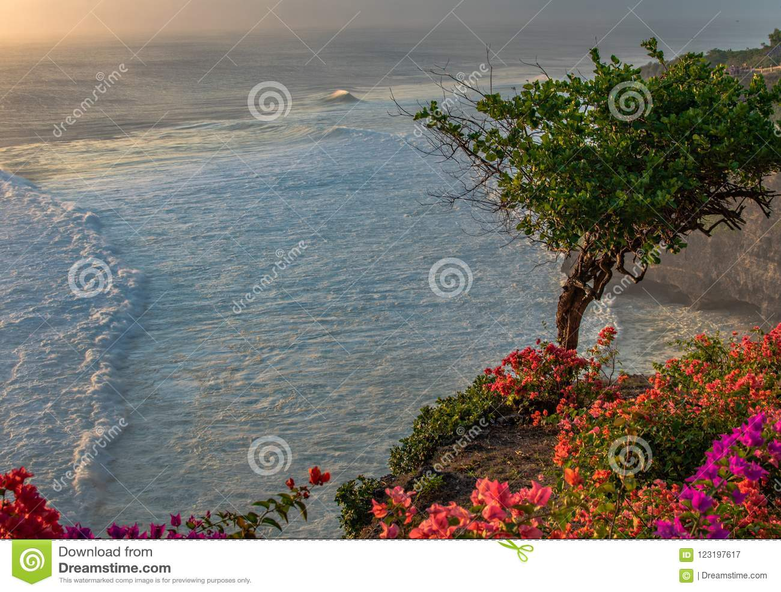 Fantastics-Ansichtbaum und -blumen auf einer Felsenklippe auf dem Indischen Ozean mit Wellen auf Sonnenuntergang