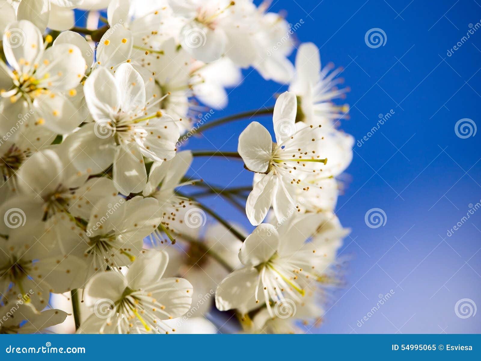 Fantastiska härliga blomningar blommar white