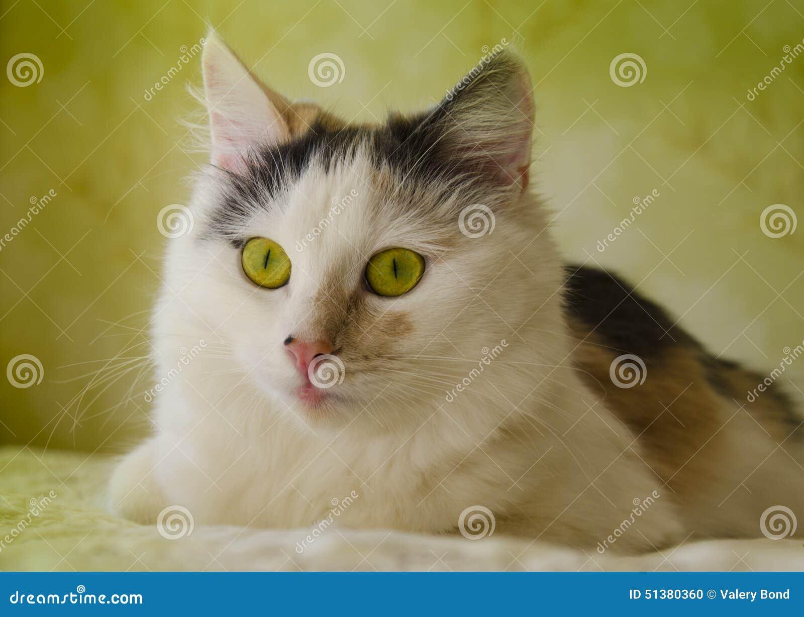Fantastiska kattögon