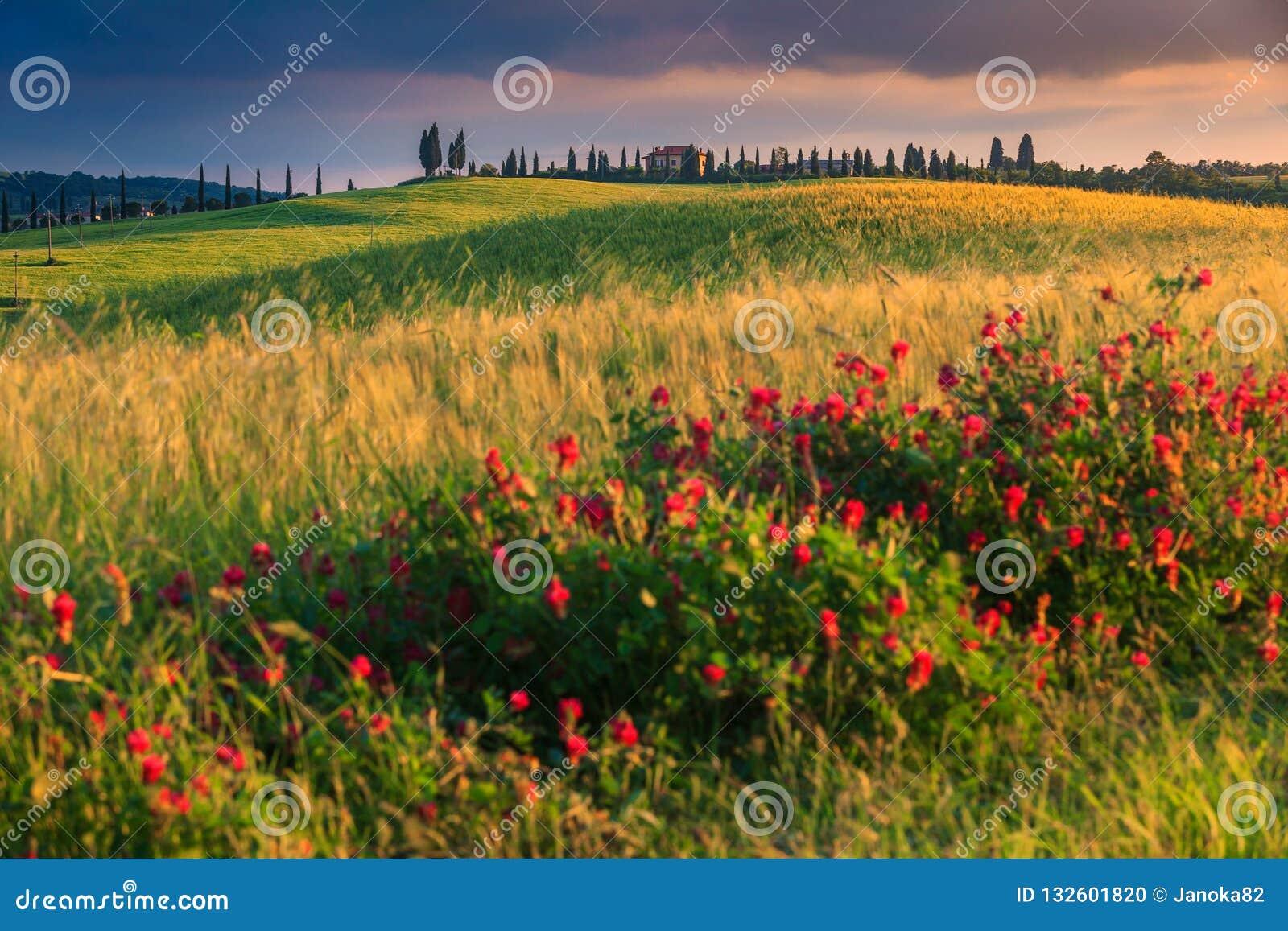 Fantastiskt Tuscany landskap på solnedgången nära Pienza, Italien, Europa