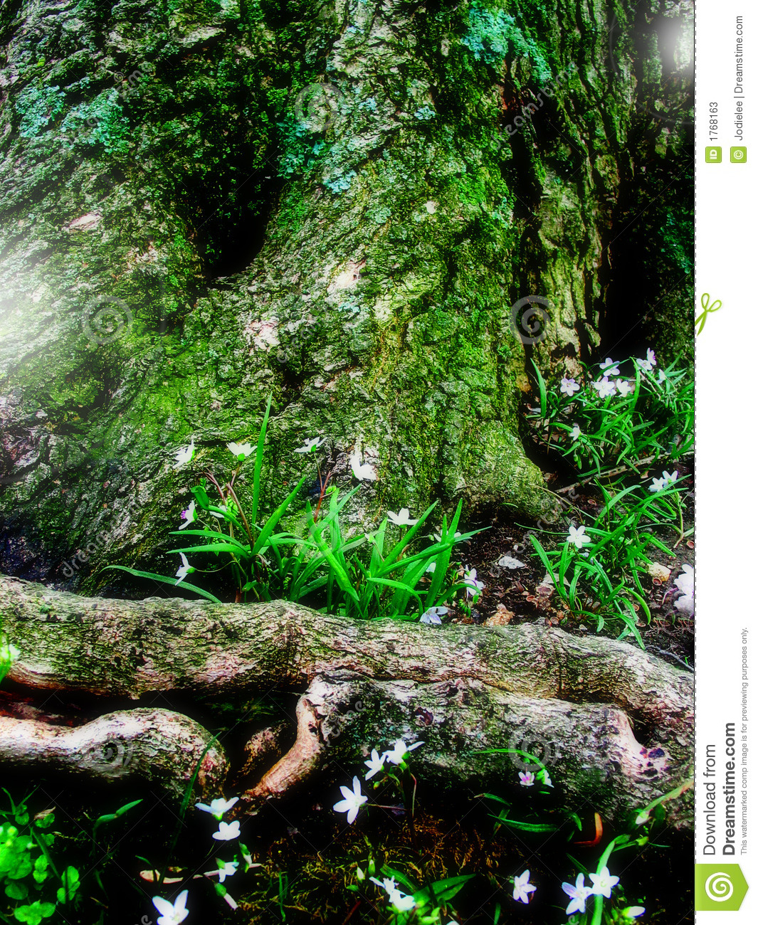 Fantasy Fairy Forest Stock Photos Image 1768163