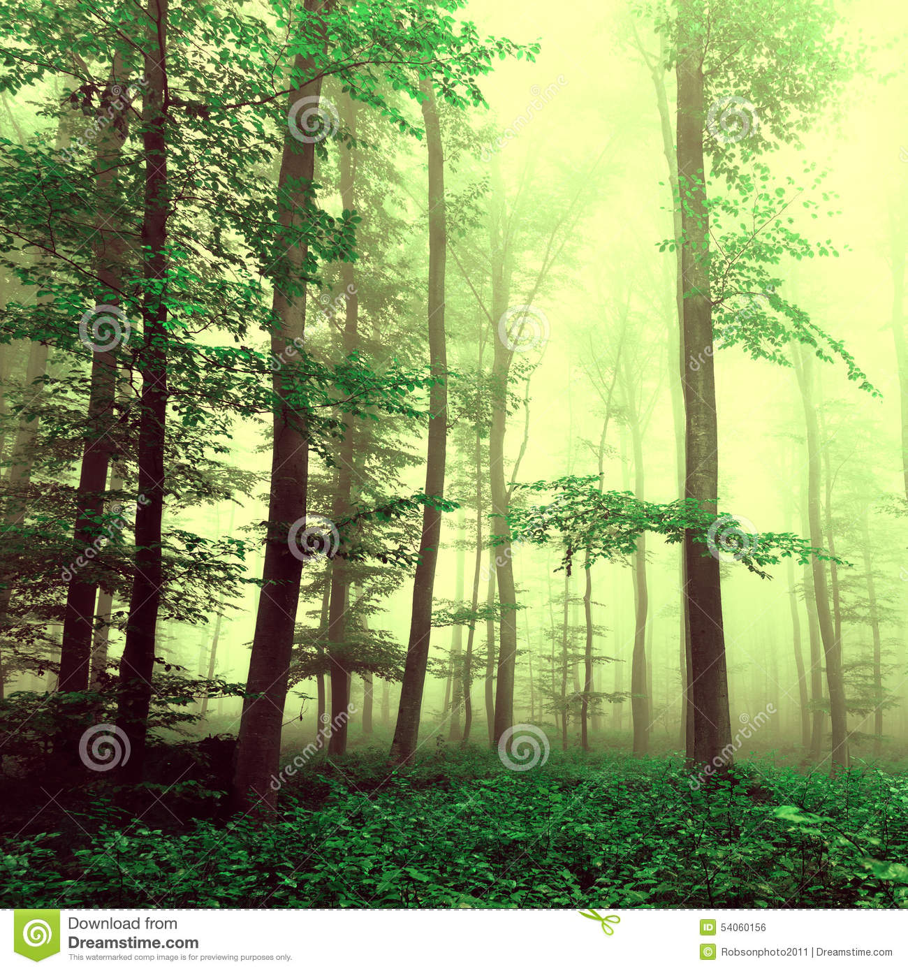 Fantasy yellow green foggy beech tree forest with mystic light color filter effect used