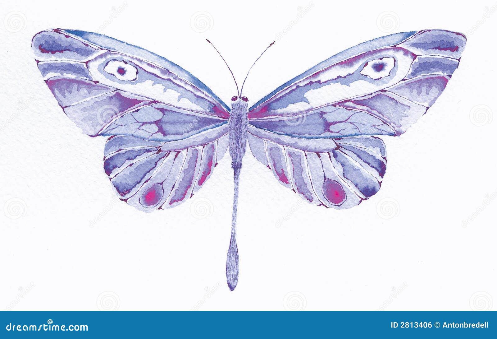 Fantazje motylie purpurowy
