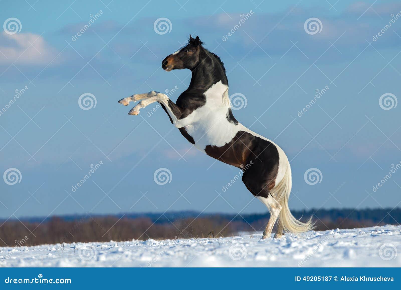 Farba koń stoi up na zimy tle