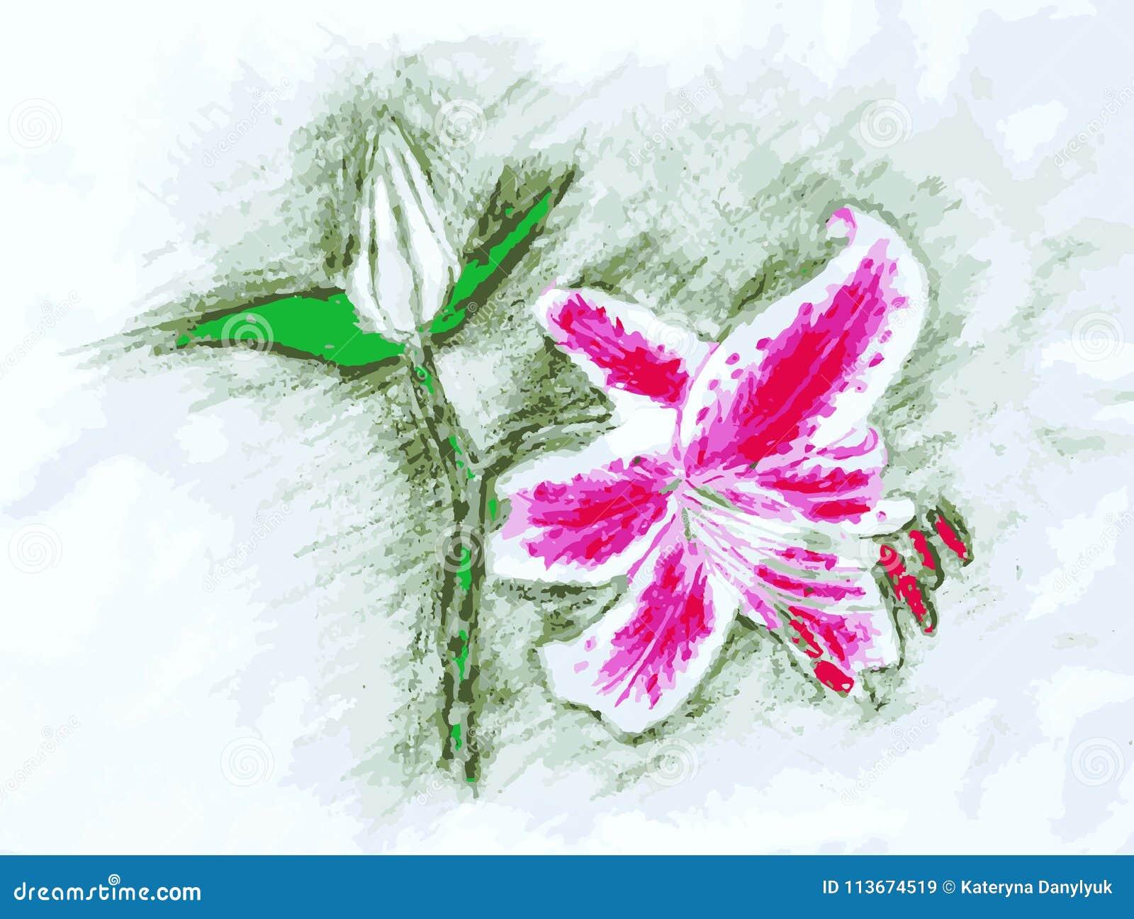 Farbige Bleistift Zeichnung Der Rosa Und Weißen Liliumanlage