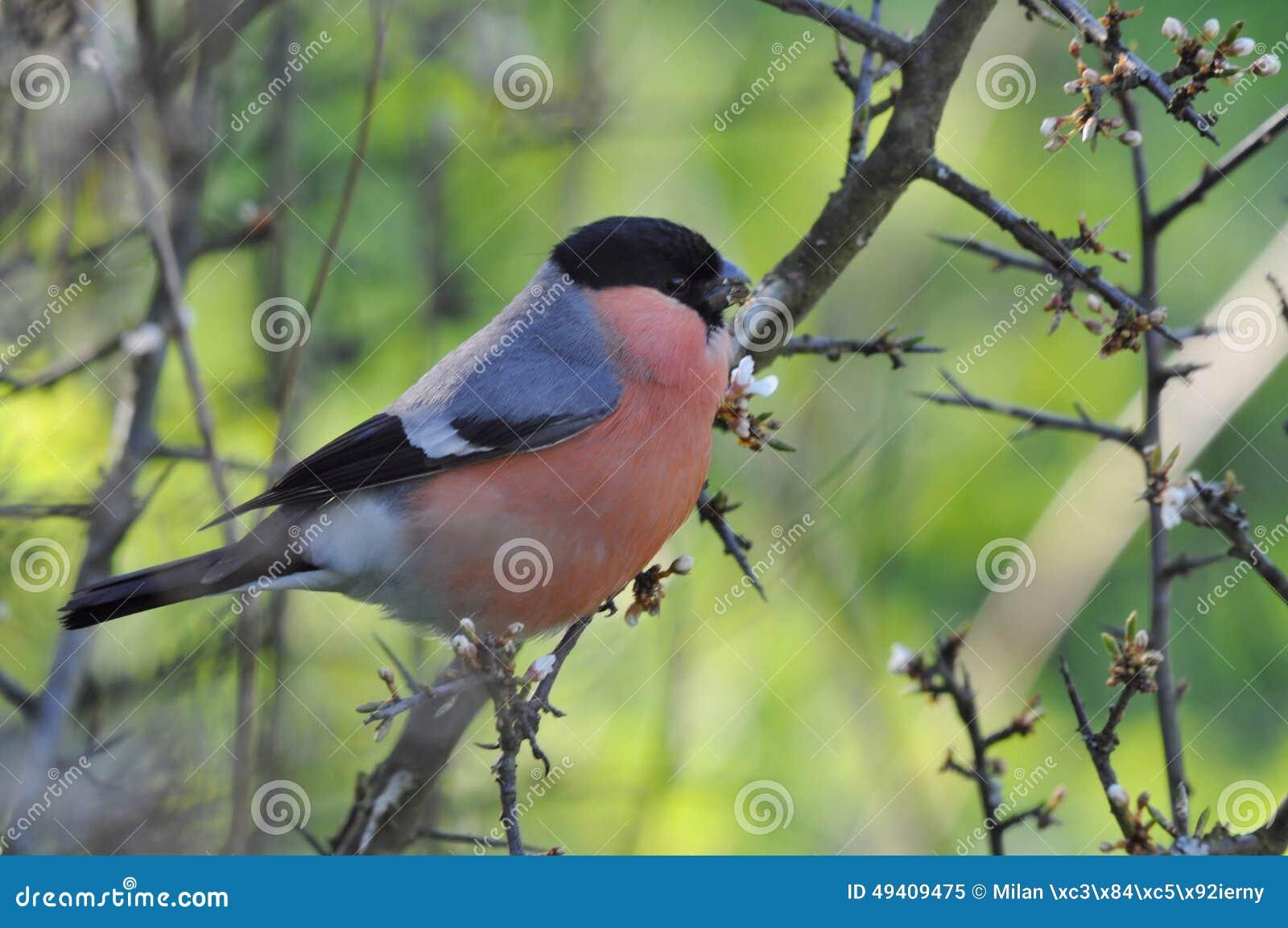 Download Farbiger Vogel stockbild. Bild von nave, wildnis, frühling - 49409475