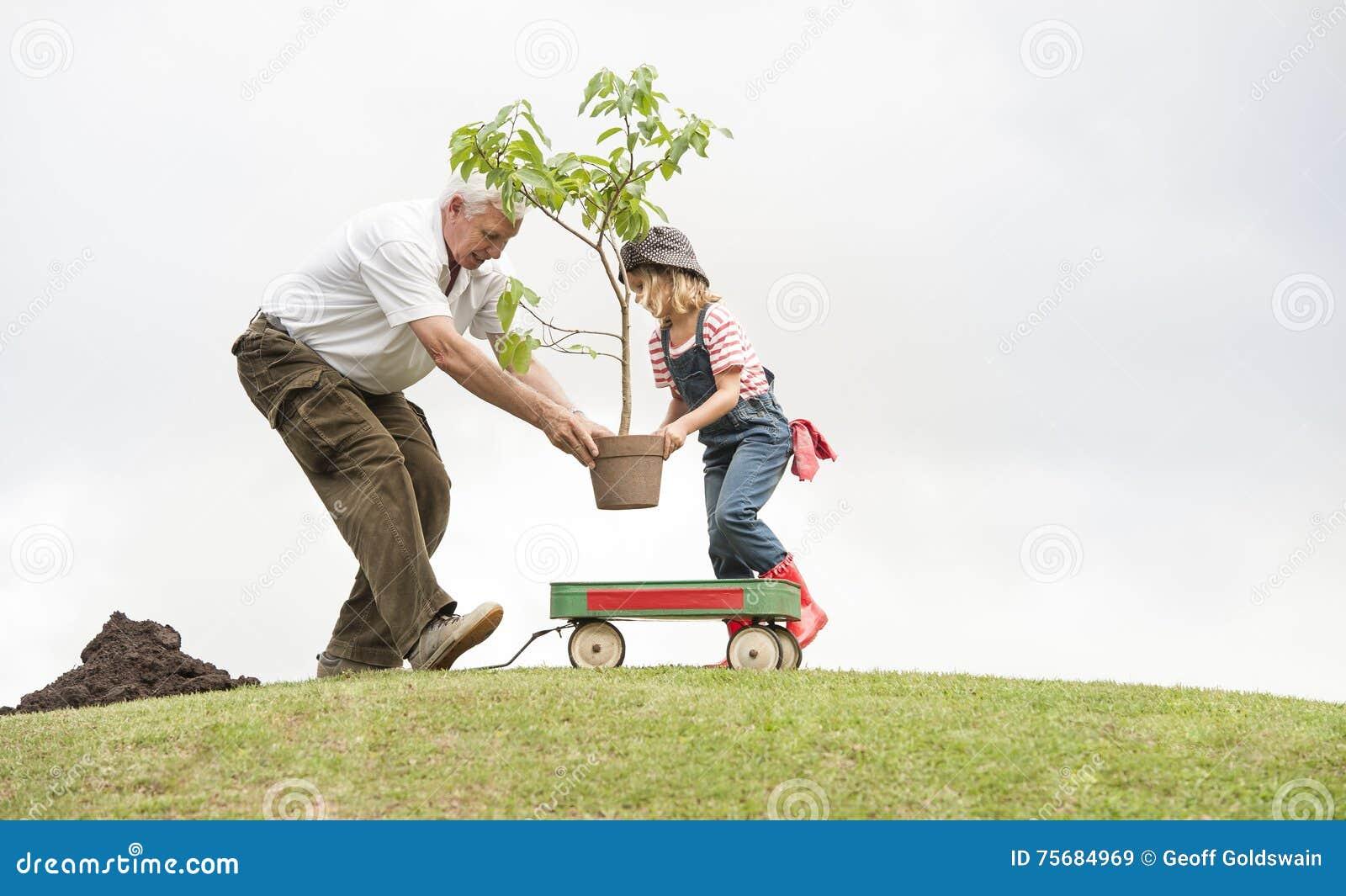 Farfadern och barnet som planterar trädet parkerar in, familjsamhörighetskänsla