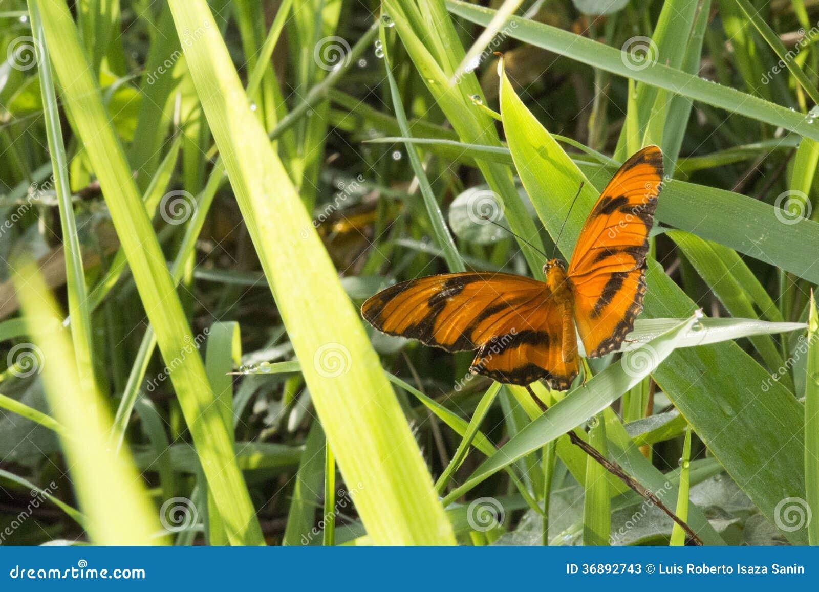 Download Farfalla immagine stock. Immagine di colori, insetto - 36892743