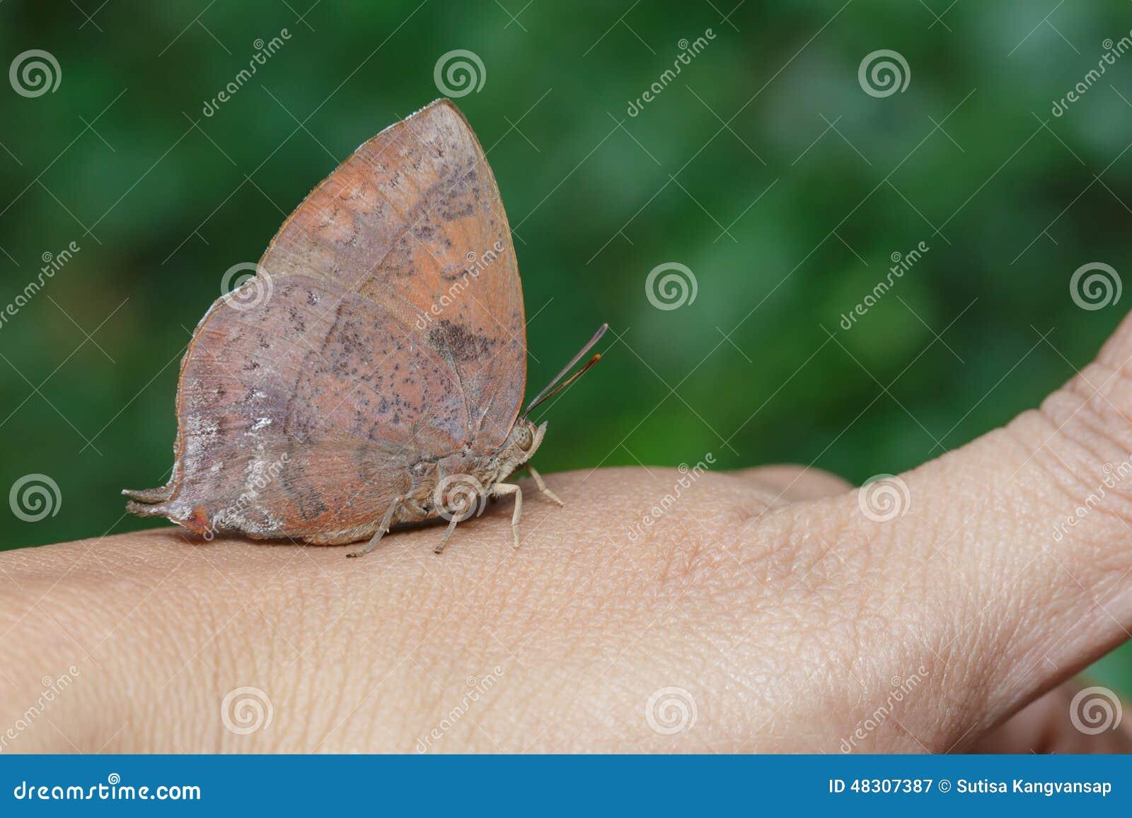 Farfalla blu della foglia porpora a disposizione for Disposizione della casa libera