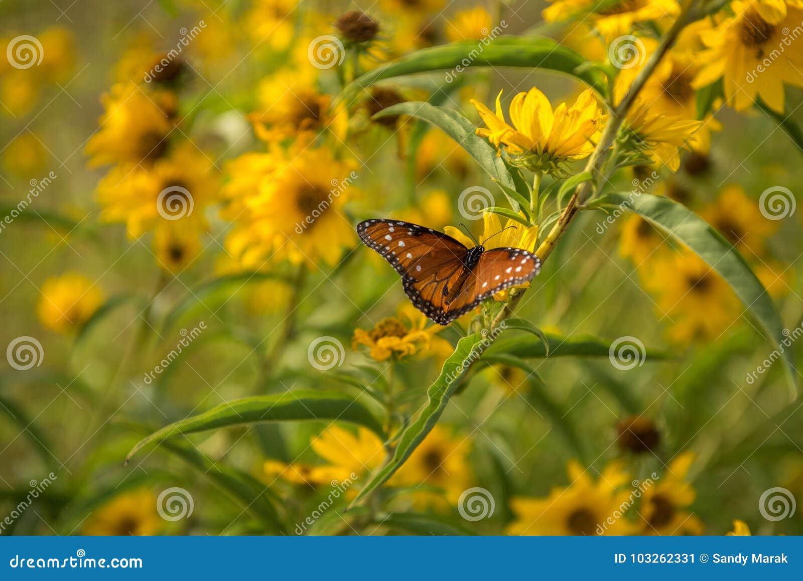 Farfalla con le ali spante