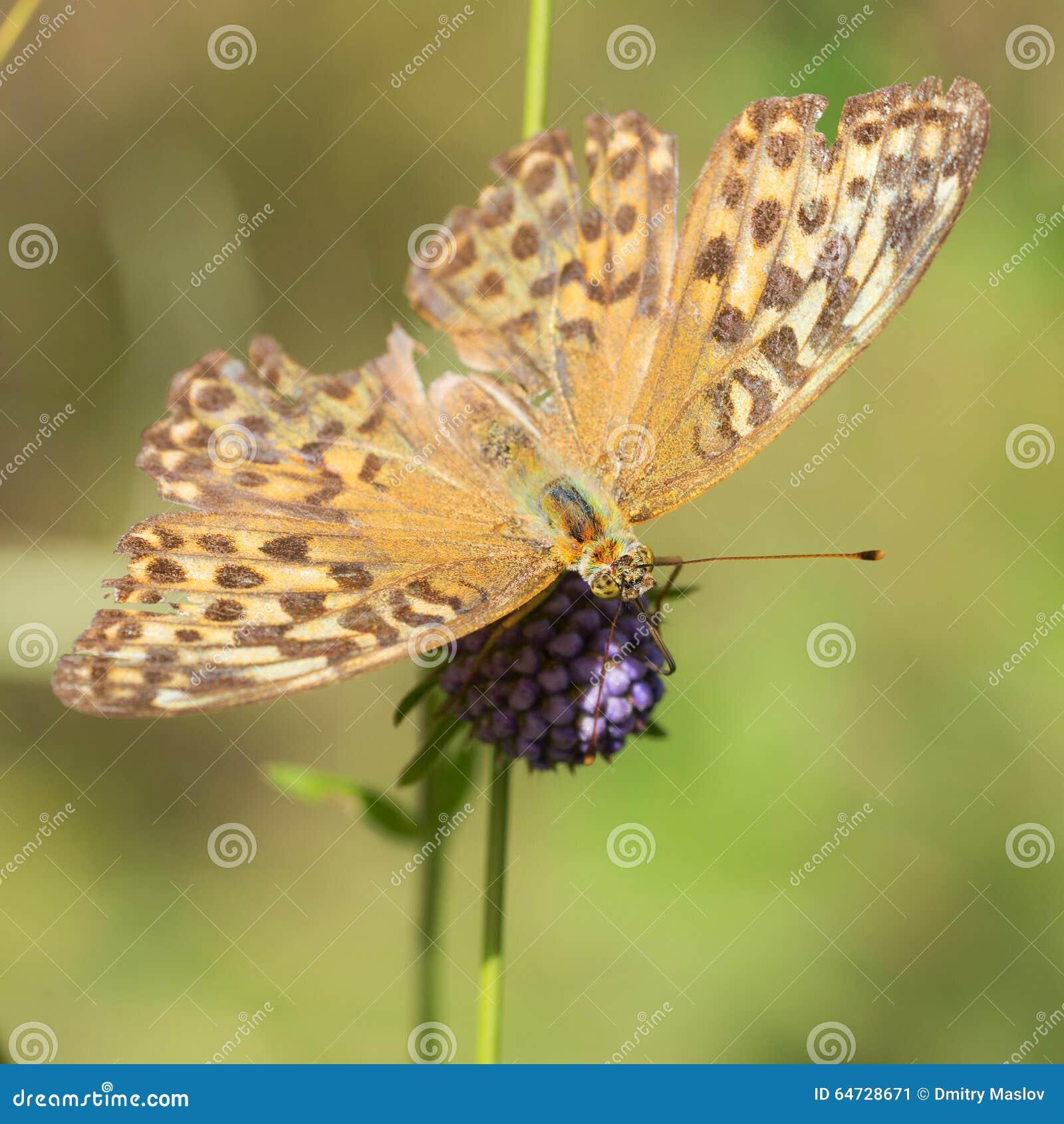 Farfalla di estate