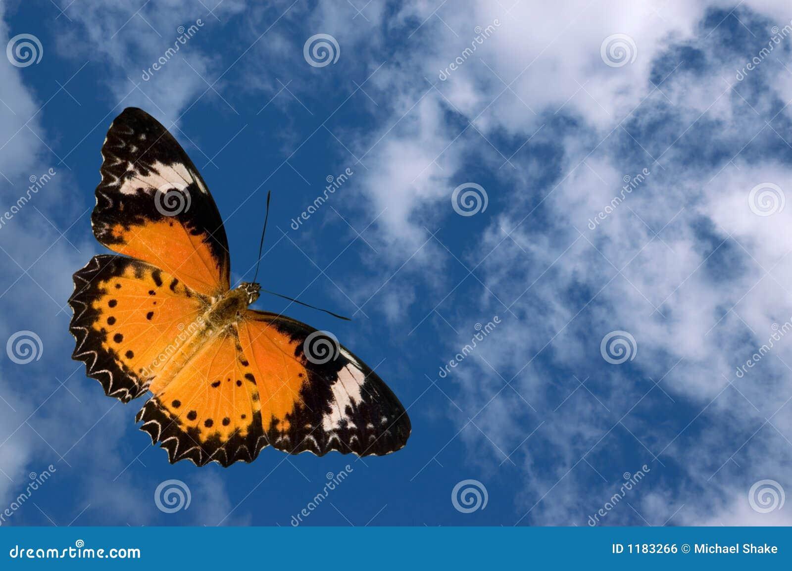 Farfalla e nubi