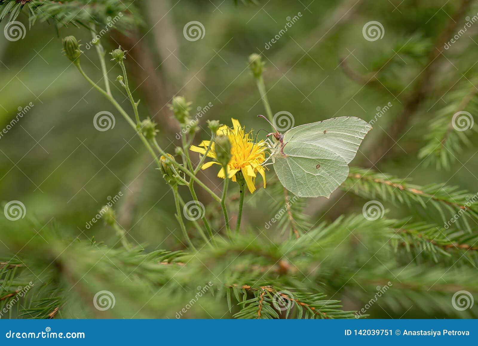 Farfalla nel campo verde