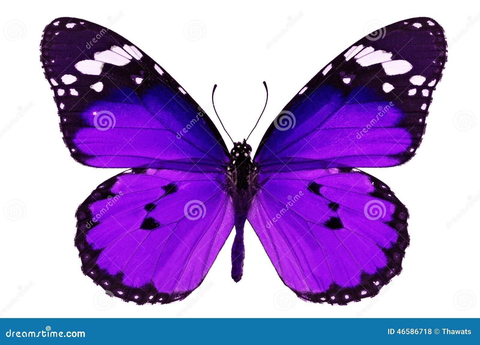 Farfalla porpora