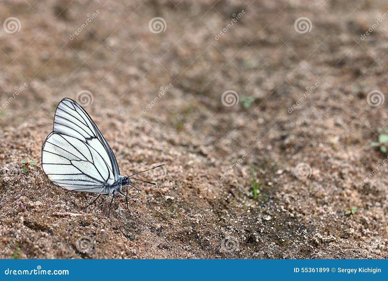Farfalle bianche sulla sabbia