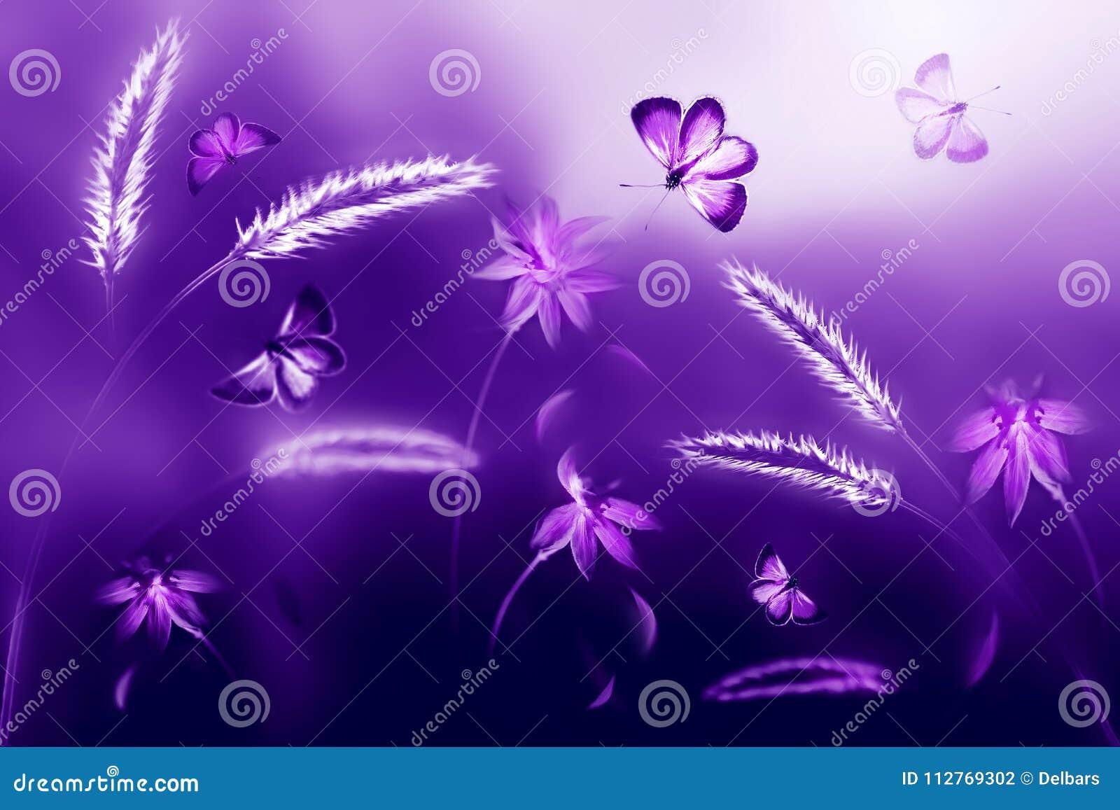 Farfalle rosa e porpora contro un fondo dei fiori selvaggi nei toni porpora e viola Immagine naturale ultravioletta artistica