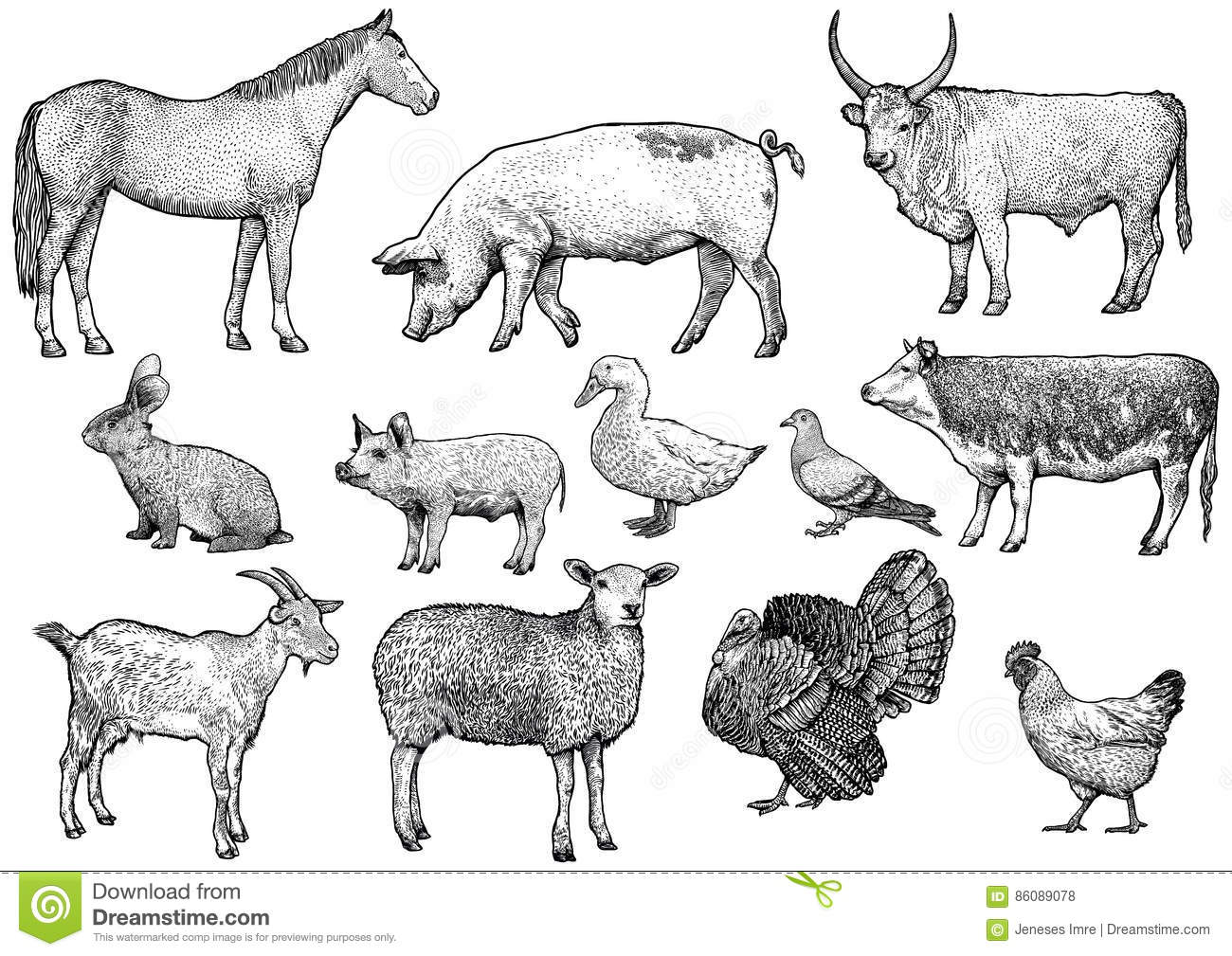 Line Drawings Of Farm Animals : Farm animal set illustration drawing engraving line art