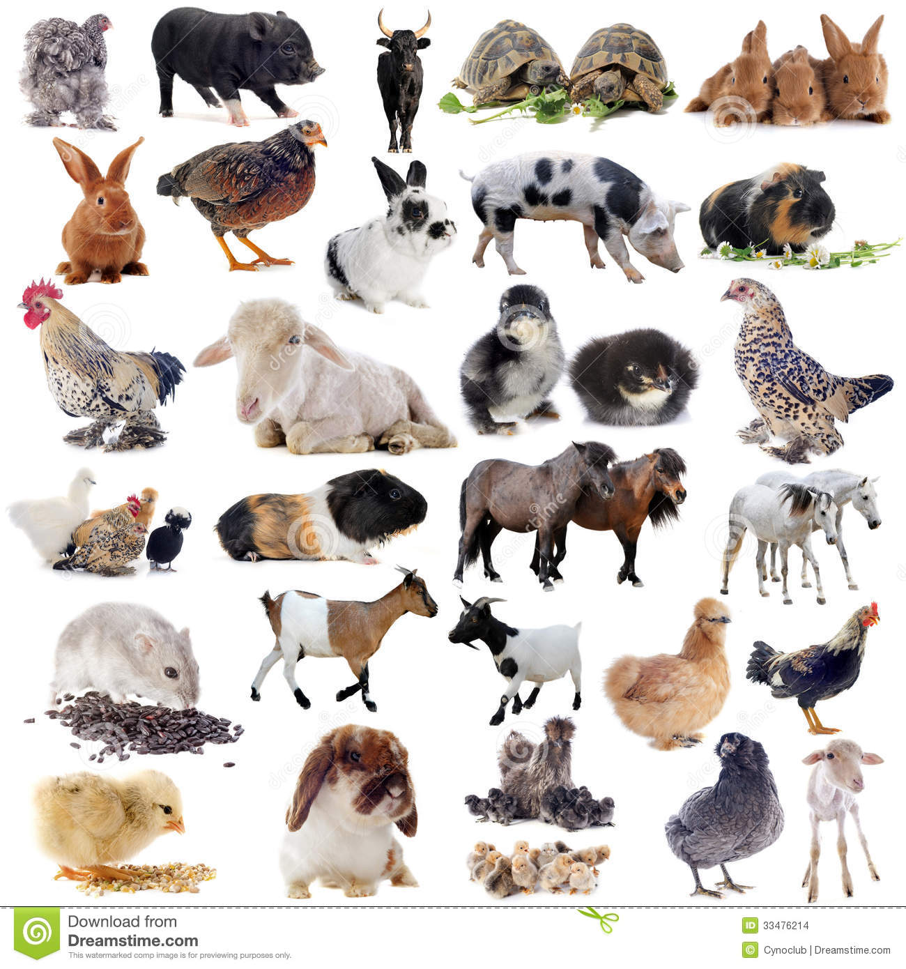 Farm Animals Stock Images - Image: 33476214
