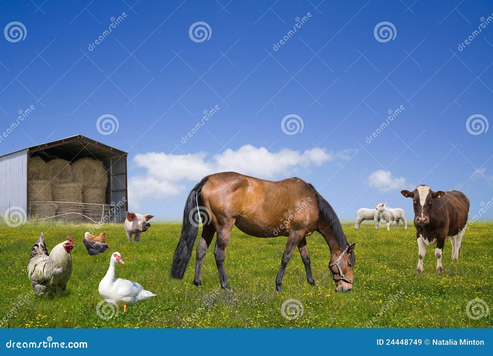 Farm animals grazing on the green field