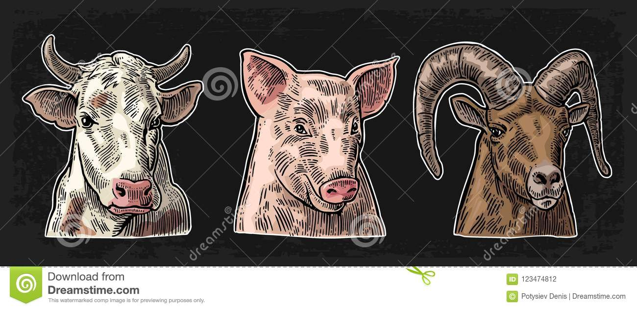Farm Animals Icon Set  Pig, Cow And Goat Heads Isolated Stock Vector