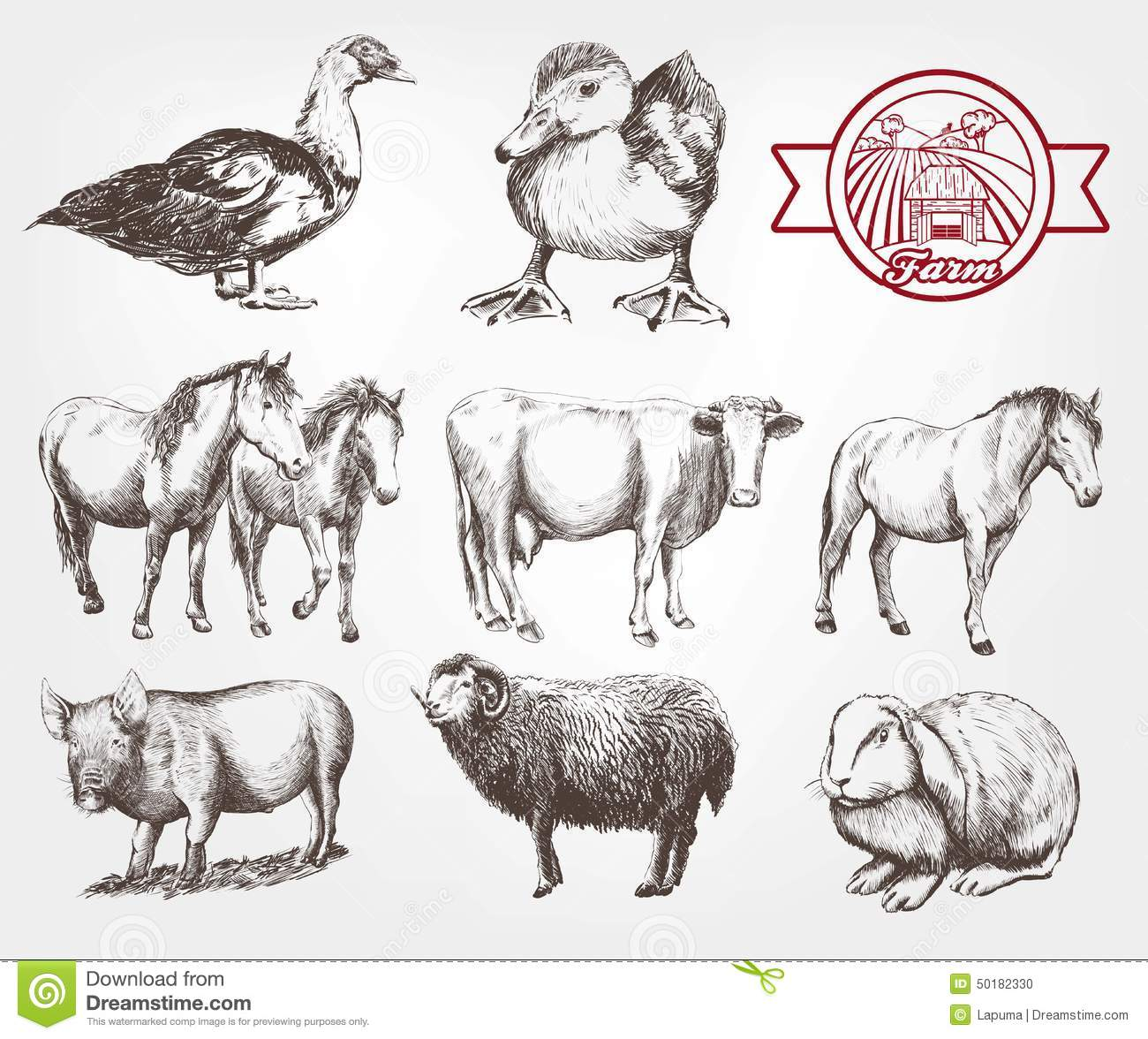Farm Animals Stock Vector. Image Of Domestic Sheep Standing - 50182330