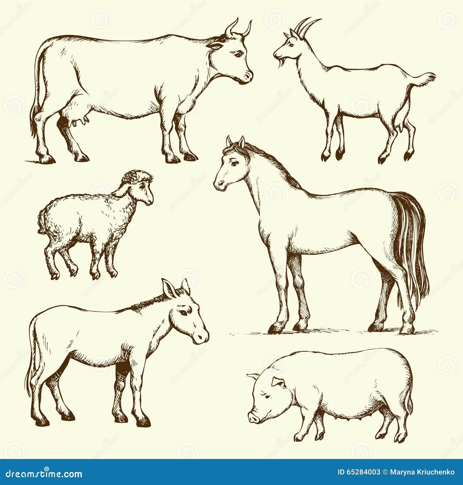 Farm Animals Vector Drawing Stock Vector Illustration Of Beast Gelding 65284003