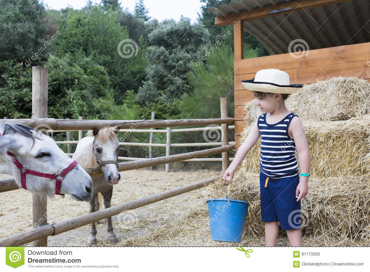 Farm boy feeding animals