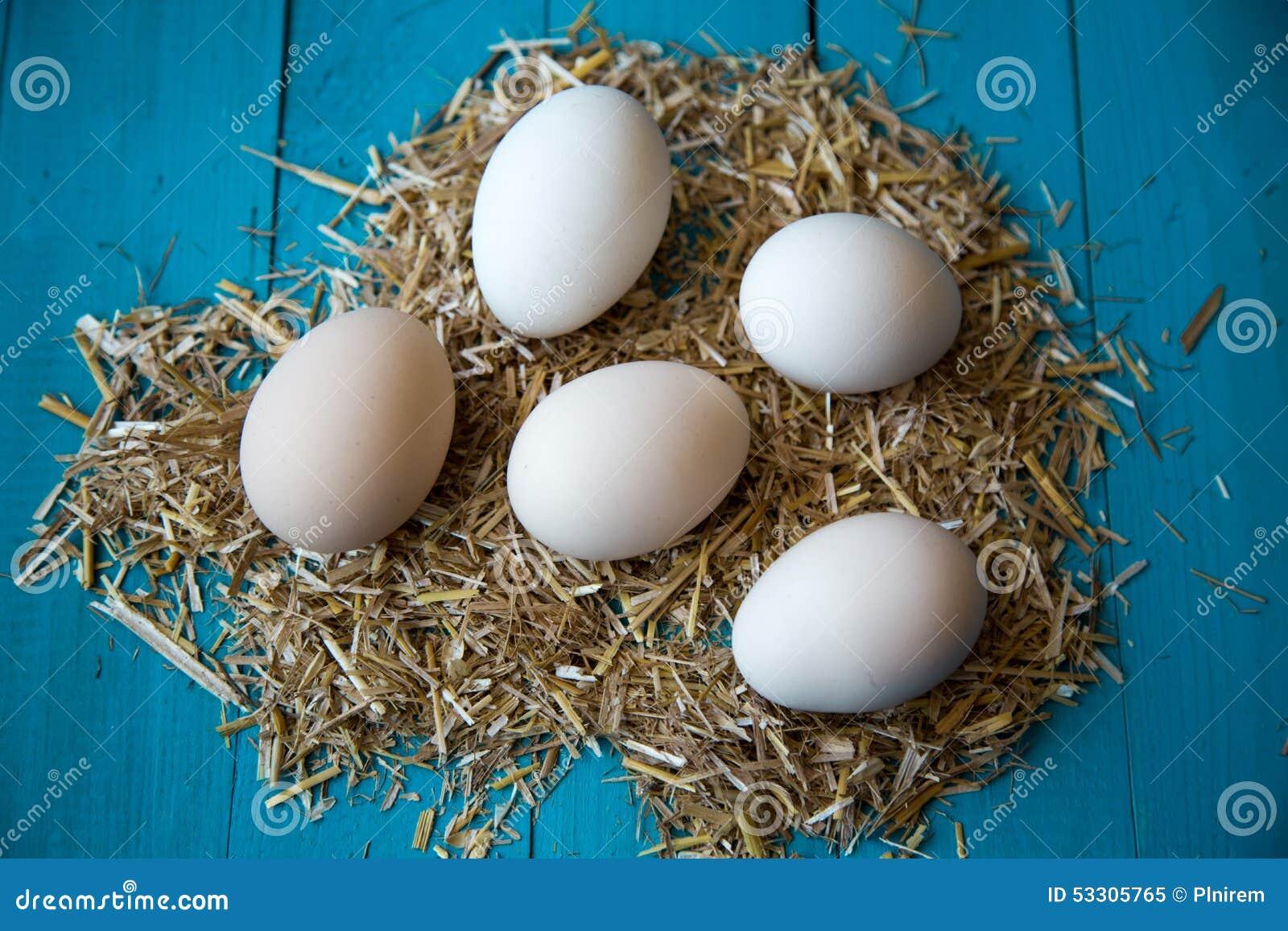 organic egg farm business plan