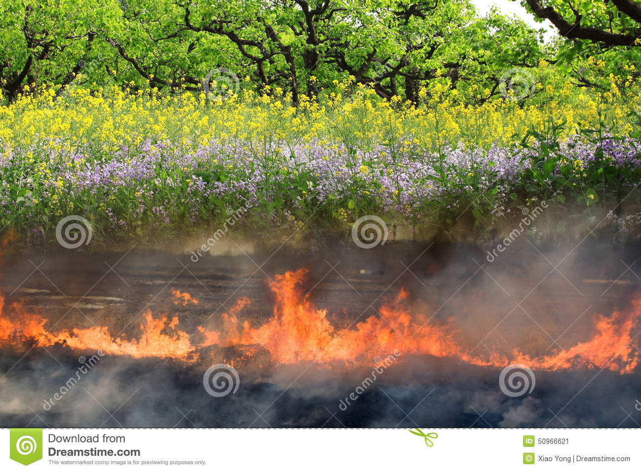 Life and death stock image. Image of flowers, burned , 50966621