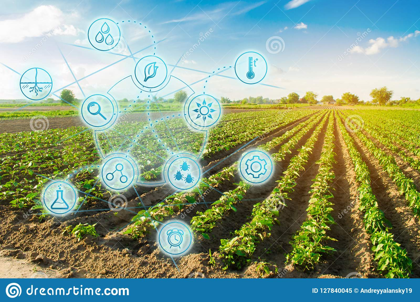 Farm field pepper. Innovation and modern technology. Quality control, increase crop yields. Monitoring the growth of plants