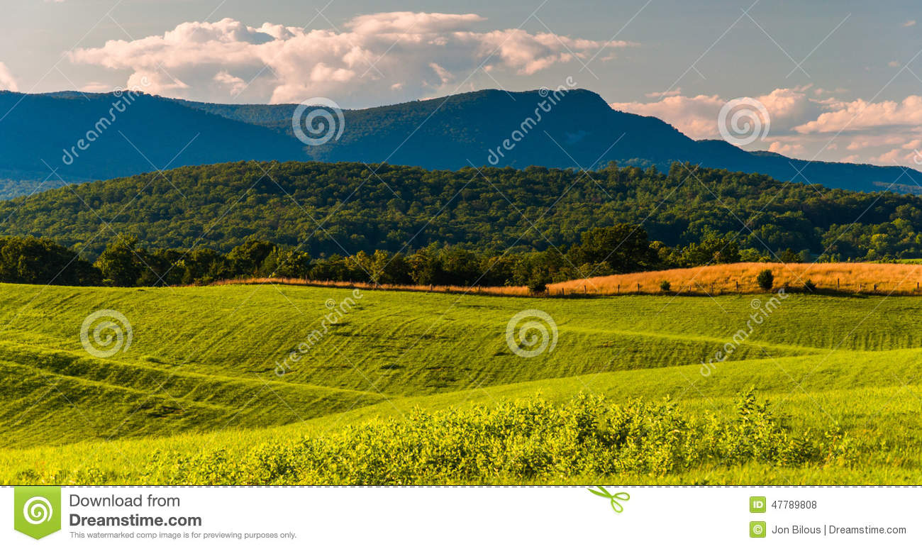 Farm fields and view of Massanutten Mountain in the Shenandoah V