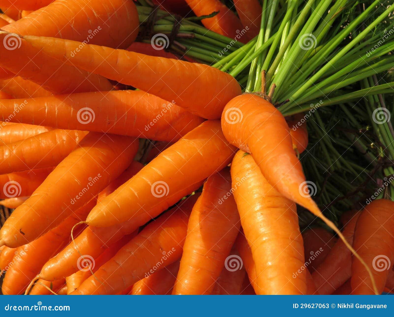 Farm Fresh Carrots Stock Photos - Image: 29627063