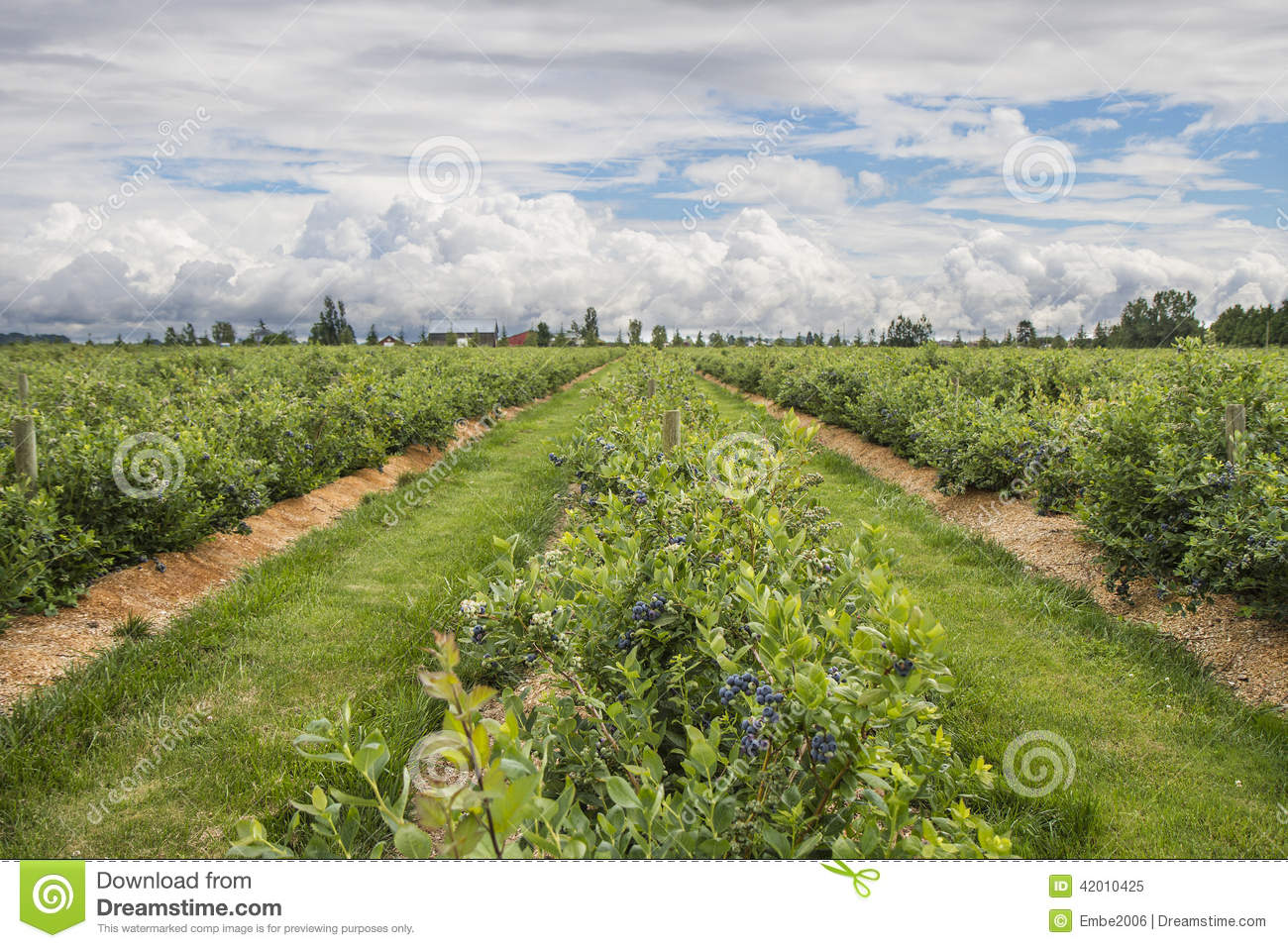 farm land stock photo image 42010425