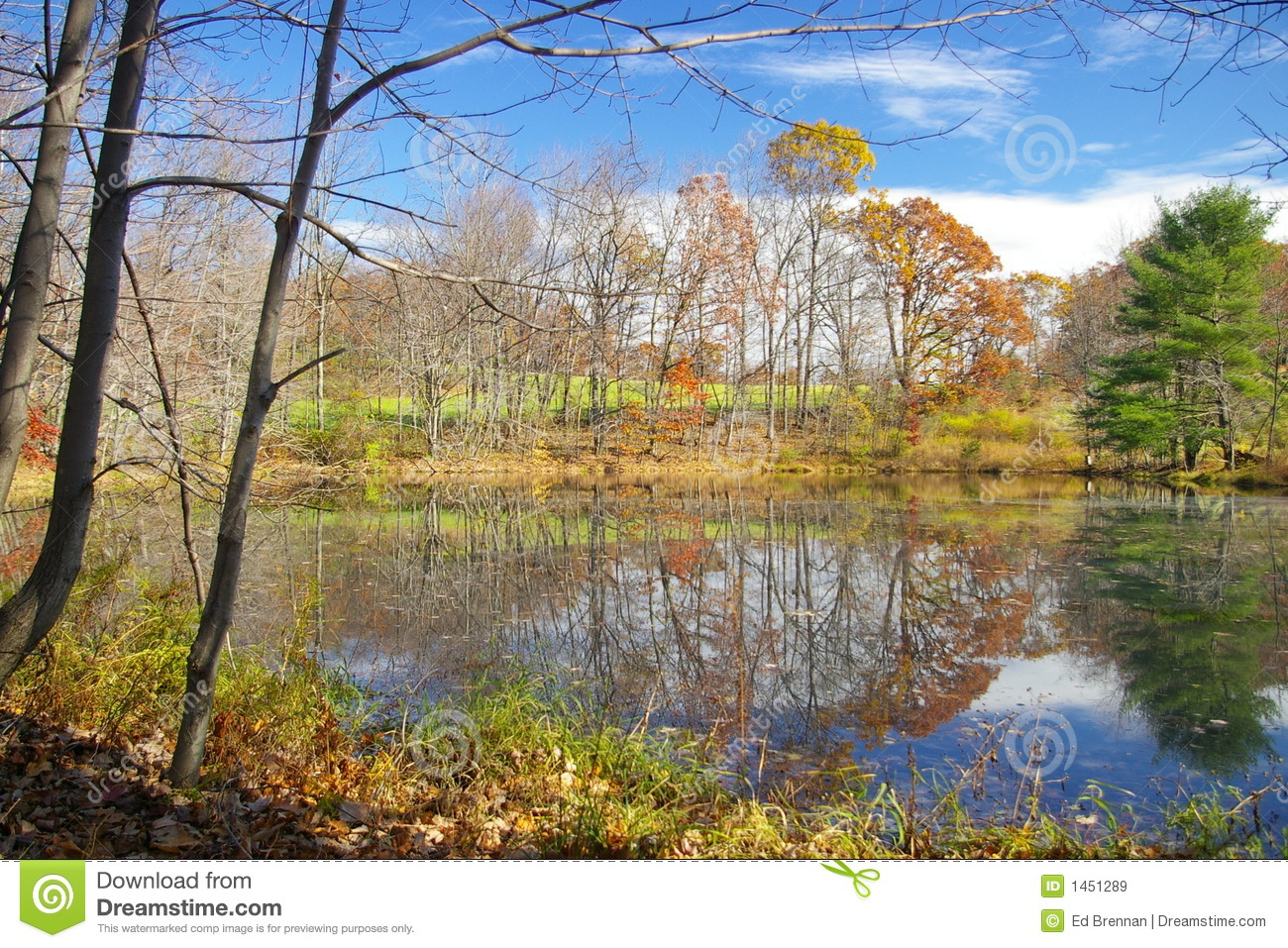 Farm Pond Royalty Free Stock Images Image 1451289