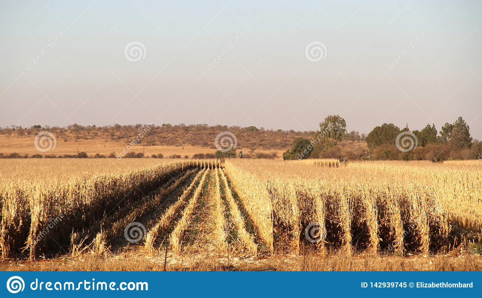 Farm in Potchefstroom, South Africa