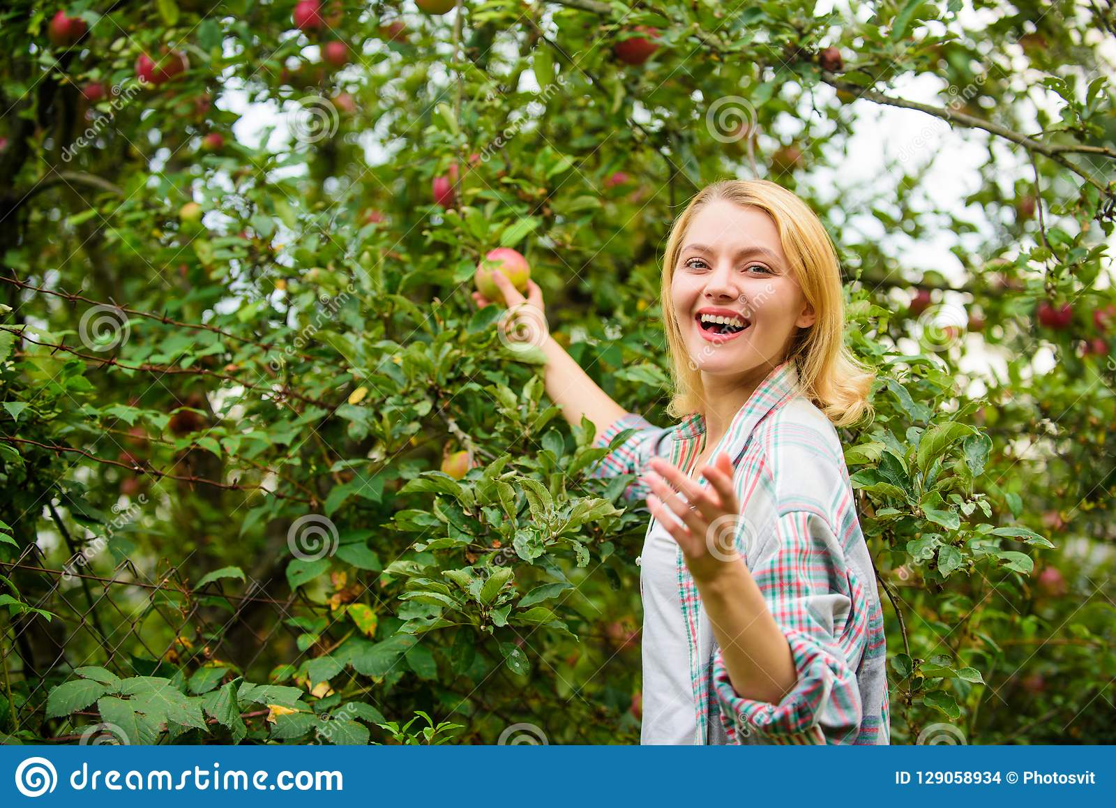 Farm produce organic natural product. Girl rustic style gather apples harvest garden autumn day. Farmer picking ripe