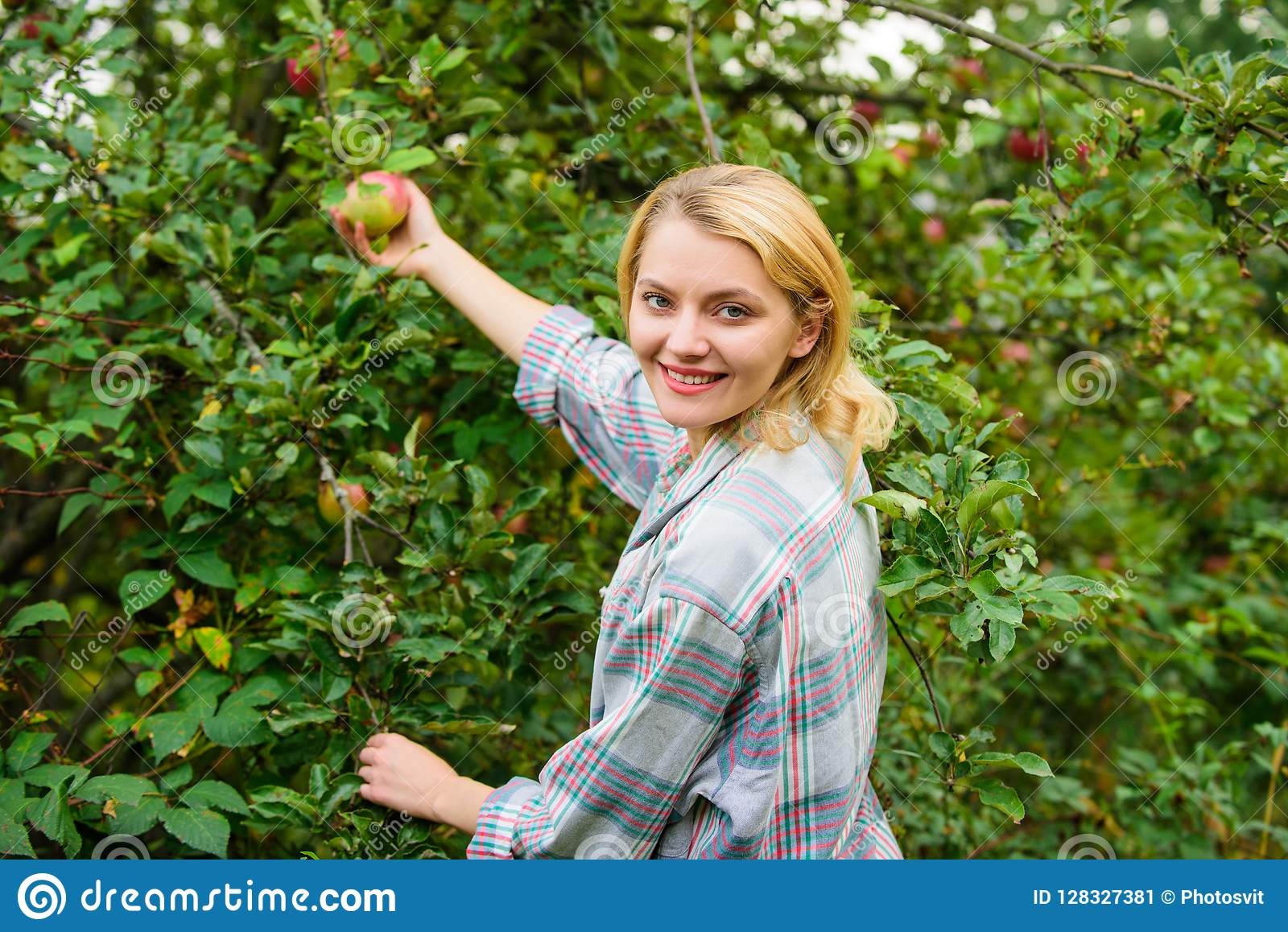 Farm producing organic eco friendly natural product. Girl gather apples harvest garden autumn day. Farmer lady picking