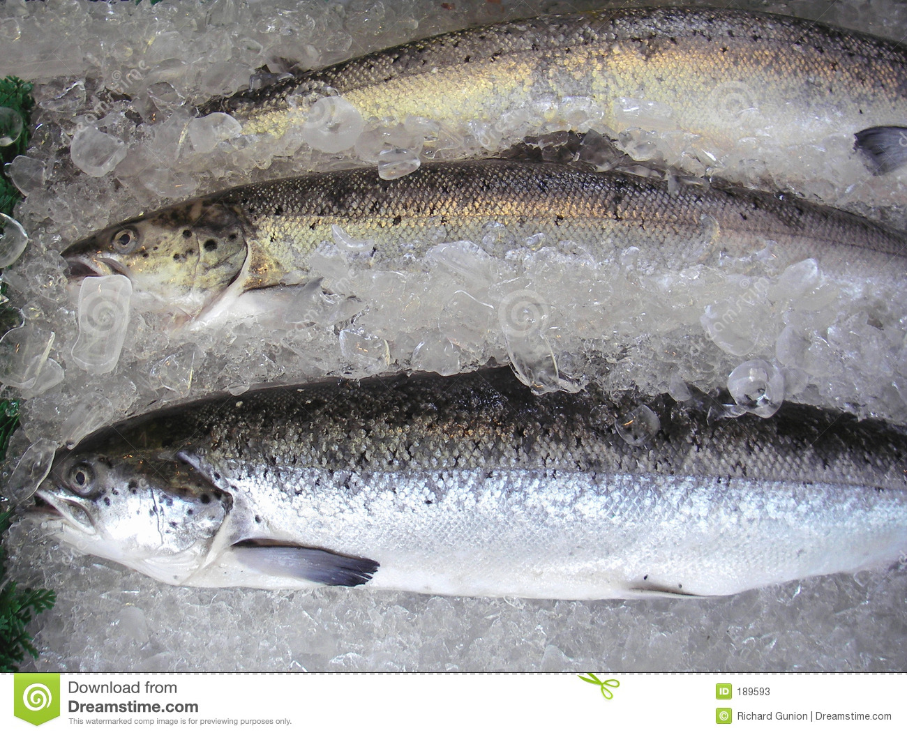 Farm raised salmon stock photos image 189593 for Atlantic fish market