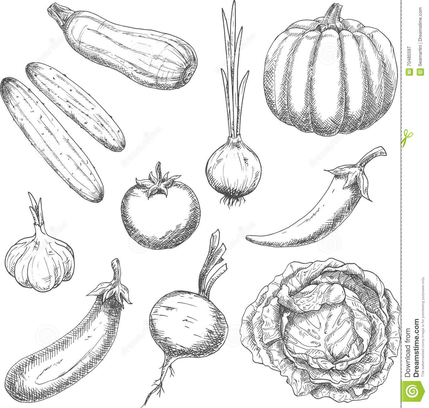 Farm Vegetables Sketches For Agriculture Design Stock
