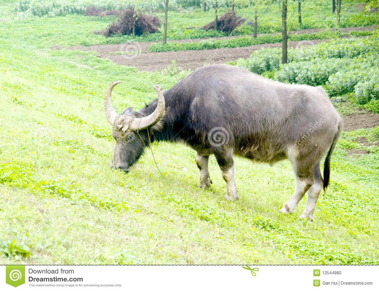 Project Report 10 buffaloes