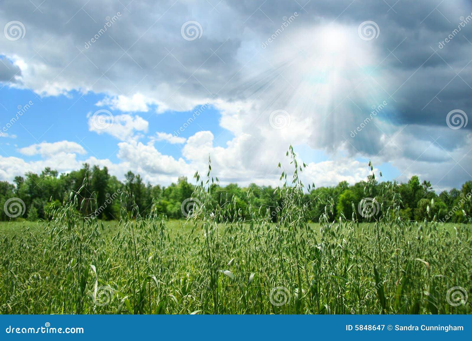 Farma zboża lata uprawy pola