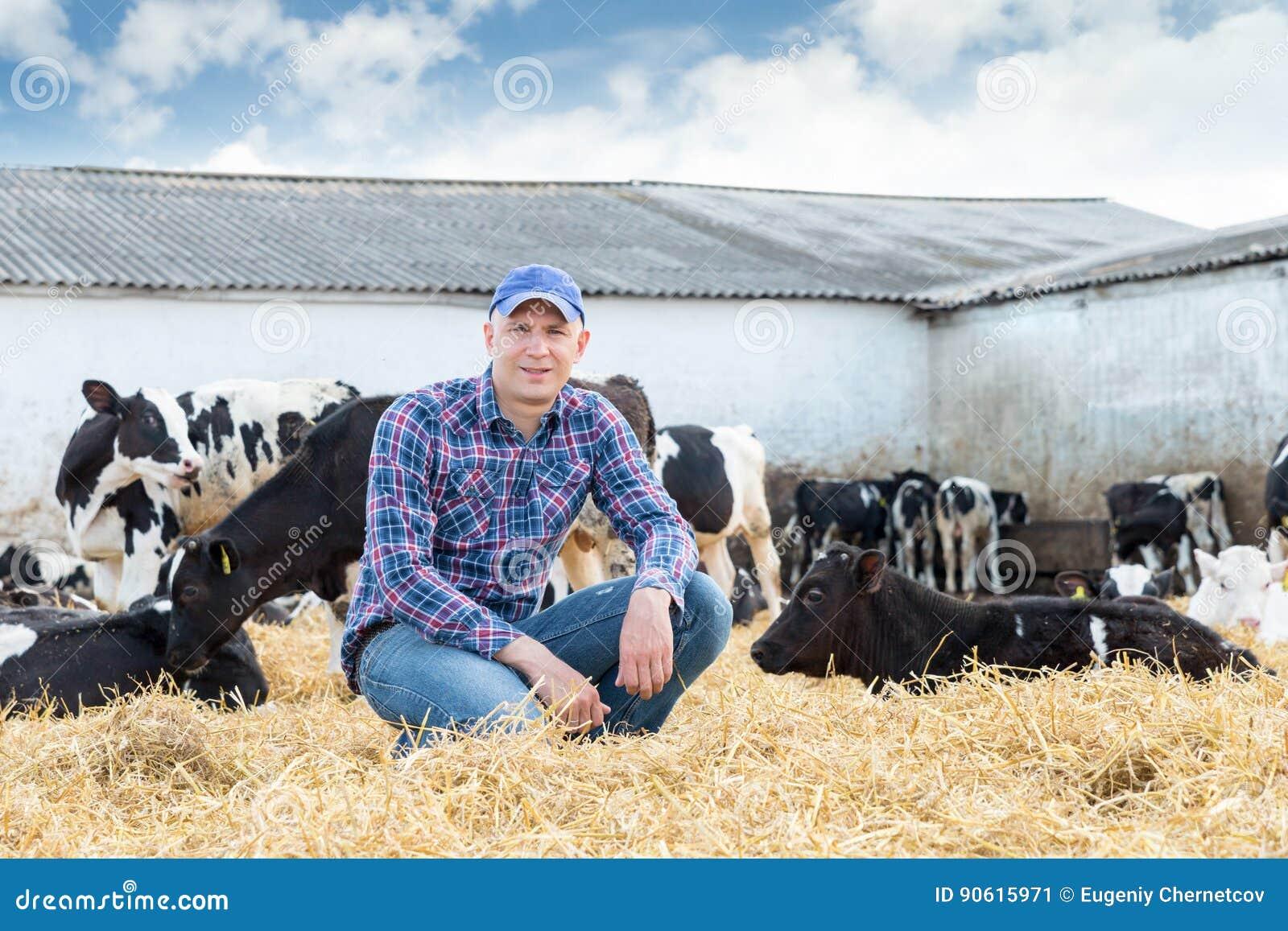 Farmer που λειτουργεί στο αγρόκτημα με τις γαλακτοκομικές αγελάδες