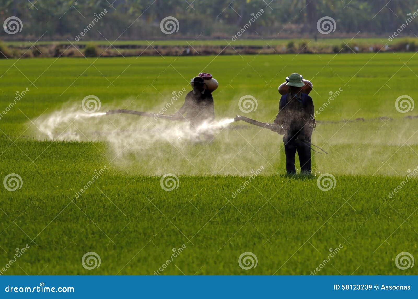 Farmer που ψεκάζει το φυτοφάρμακο στον τομέα ορυζώνα