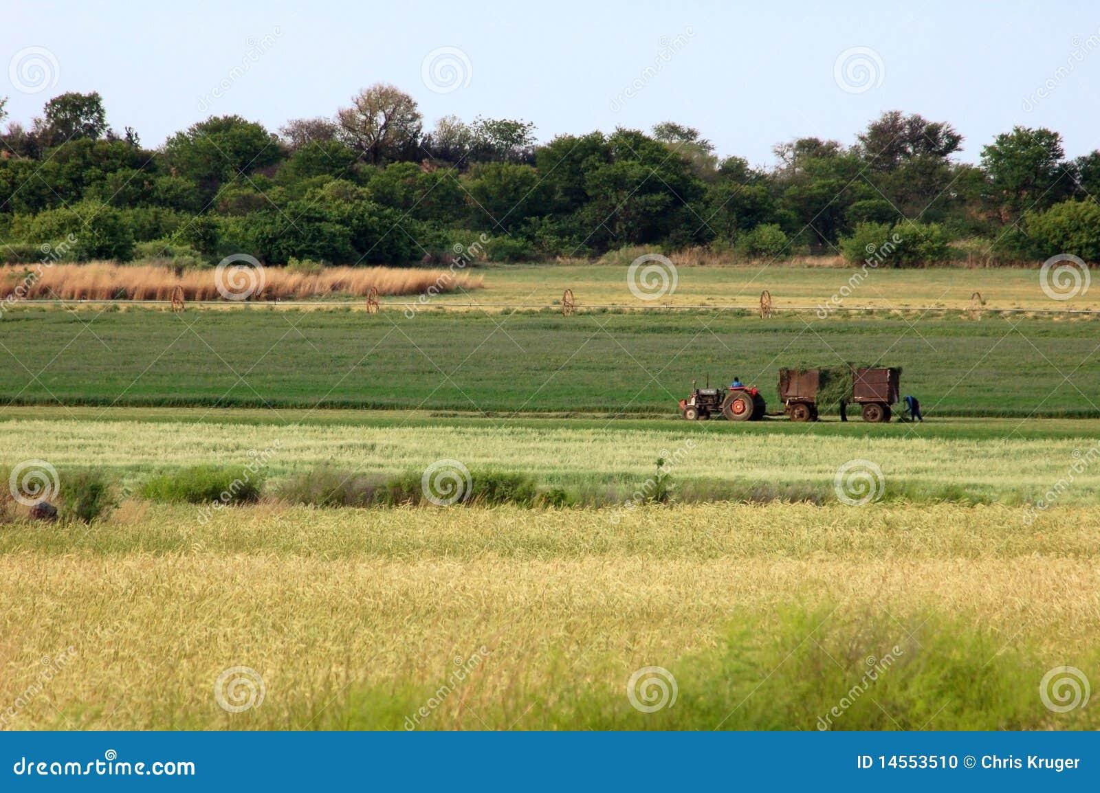 Farmer in Africa