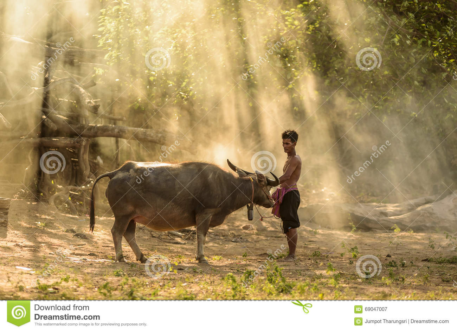 Farmer and buffalo