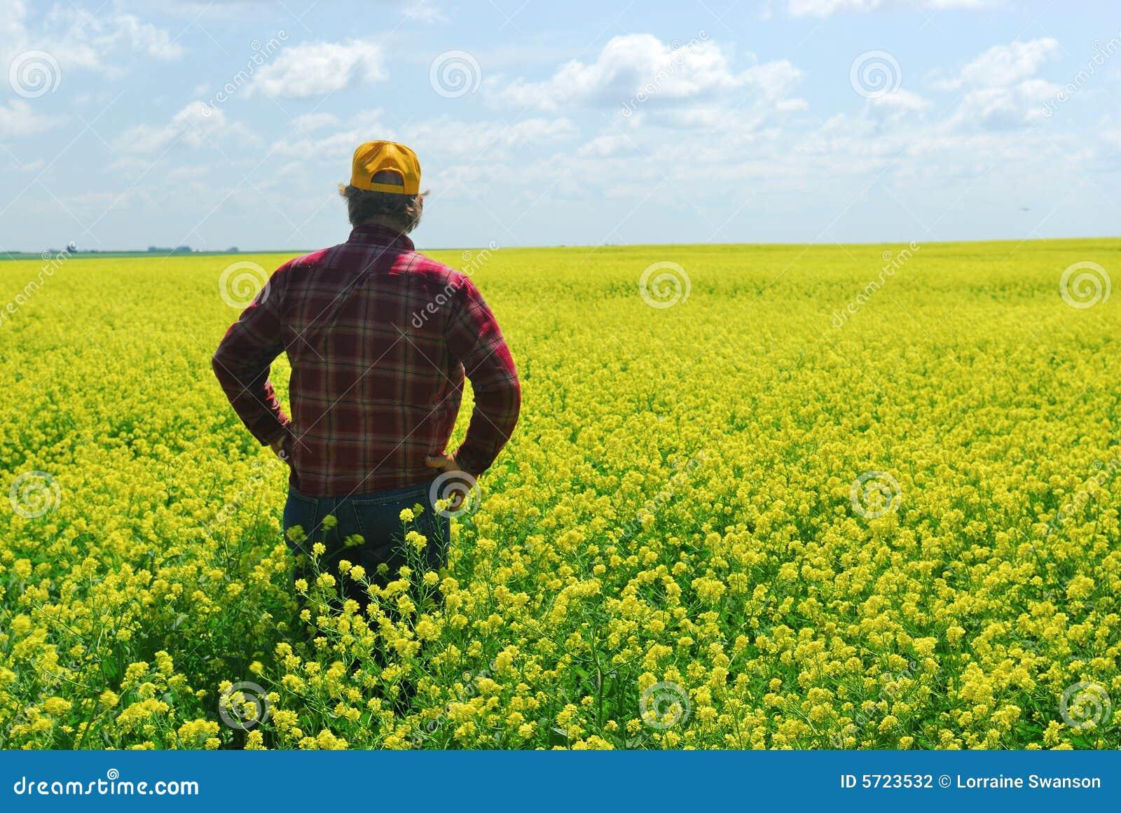 Download Farmer in Canola Crop stock photo. Image of farm, pixart - 5723532