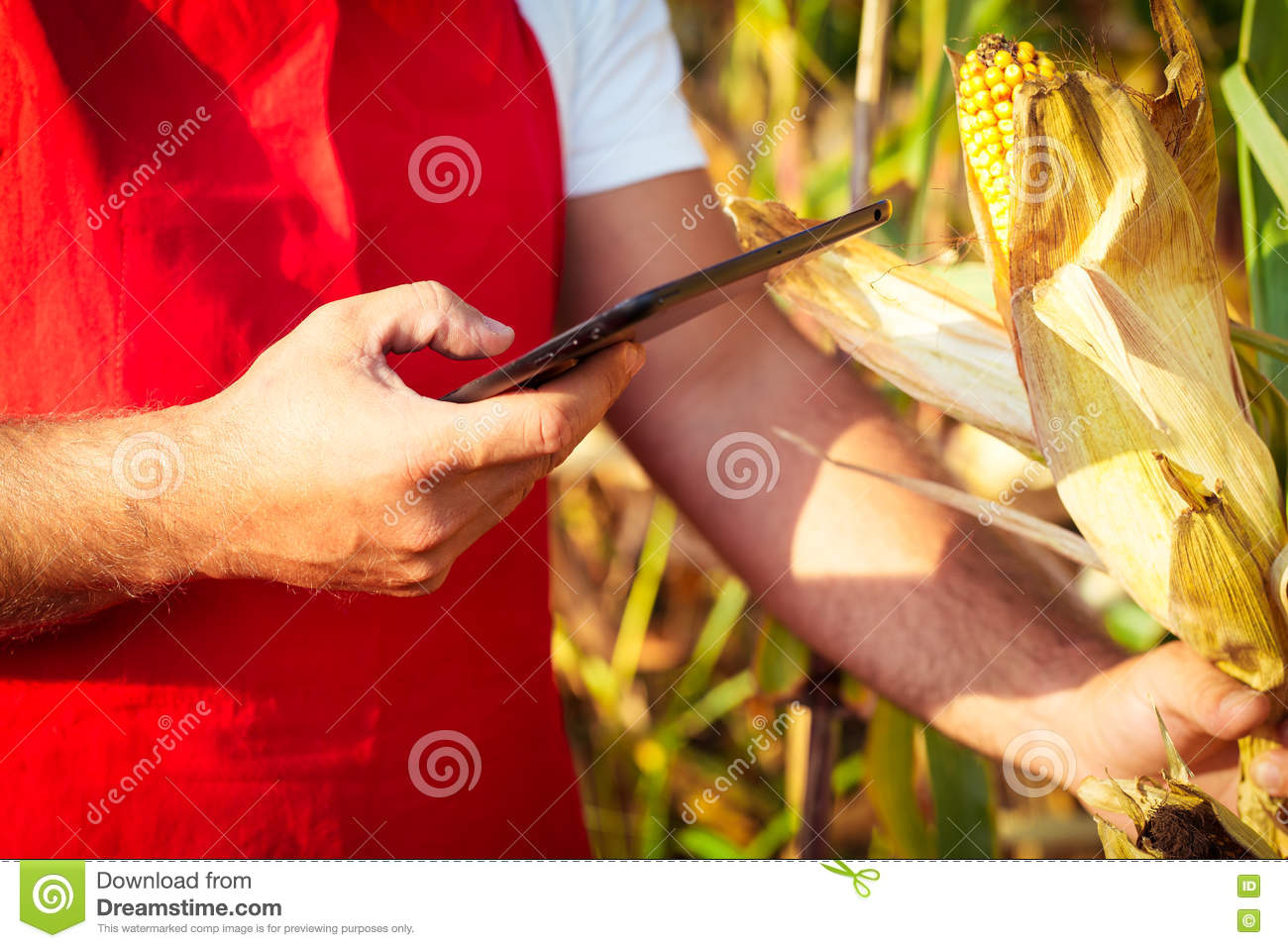 Farmer in cornfield using electronic tablet